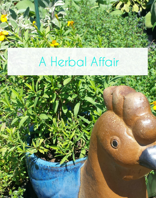 A Herbal Affair ~ The Top 3 Tips For Herb Gardening Success